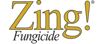 Zing!<sup>®</sup>